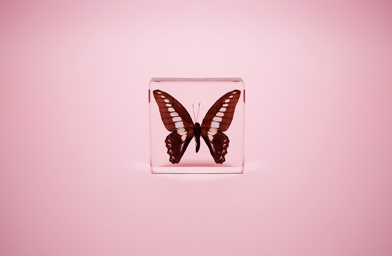 Butterfly in glass case shot by photographer Nicholas Rouke